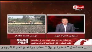 الزراعة بـ«النواب» تطالب وزير المالية بضخ الأموال لاستلام الأقماح من المزارعين