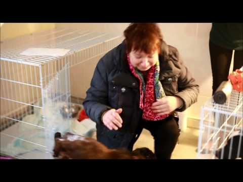Спаниель, спасенный из «концлагеря» для собак в Нижнем Новгороде, возвращен хозяйке