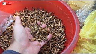 Người đàn ông bán đủ loại côn trùng cho chim ăn