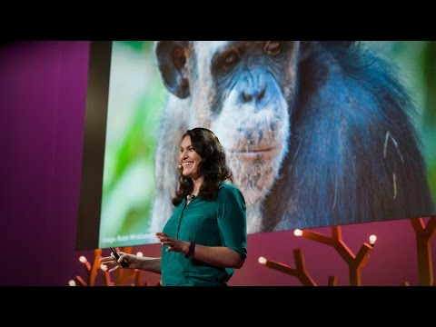 Why Animals In Zoos Need Choice | Stephanie Braccini Slade | TED Institute