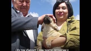 Как живет первый приют для бездомных животных в Узбекистане?