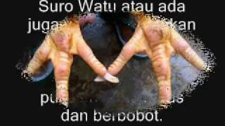 Video 5 Katuranggan Ayam Petarung TERBAIK!! download MP3, 3GP, MP4, WEBM, AVI, FLV Agustus 2018