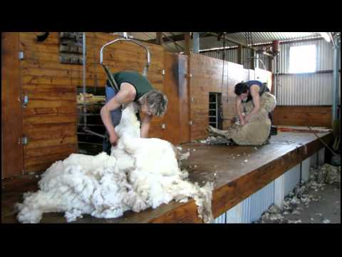Sheep Shearing. Vic Australia. 16-10-2010