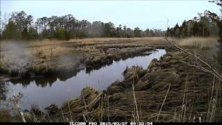 Grassle Marsh Timelapse