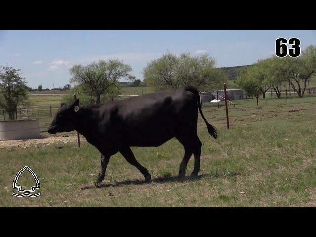 Pearcy Angus Ranch Lot 63