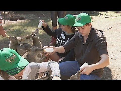 Вопрос: Как быть смотрителем зоопарка?