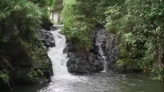 dondobuchinotaki20160717