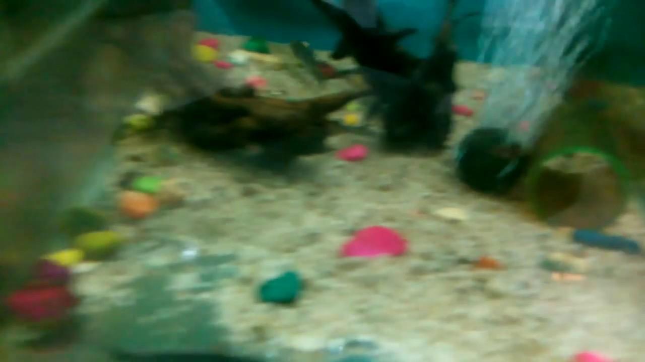 Freshwater fish looks like dolphin - Aquarium Freshwater Dolphin Fish For Sale At Joes Aqua World 9833898901