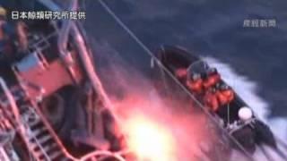 水産庁は9日、米国の反捕鯨団体「シー・シェパード」(SS)が同日、...