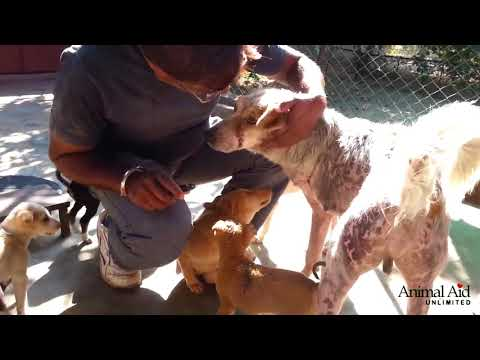 Puppies help injured dog Tony heal at Animal Aid Unlimited, India