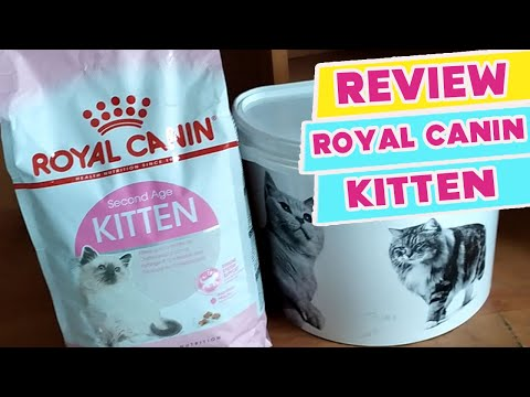REVIEW ROYAL CANIN KITTEN DRYFOOD | My Cats Diary