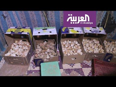 صباح العربية | موسم وفرة للكمأ أو الفقع الليبي  - نشر قبل 27 دقيقة