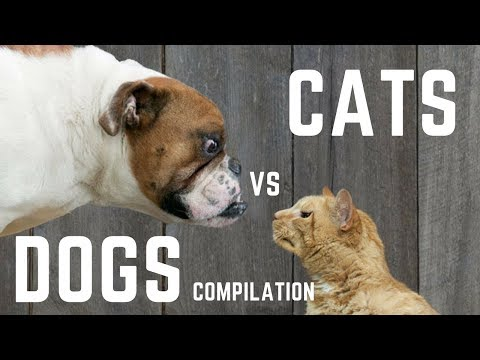 Dog vs Cat fight || funny video