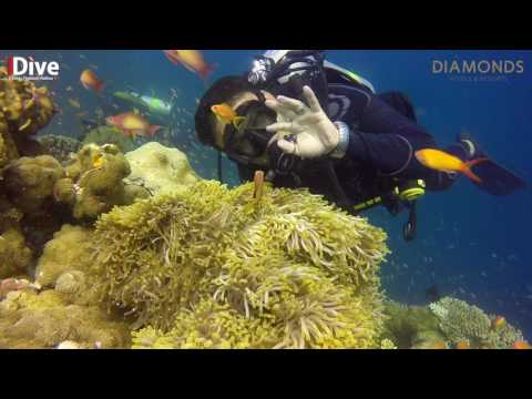 1 hour Maldives Underwater for your TV or computer screen - anemones and clown fish