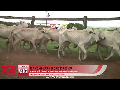 LOTE M16