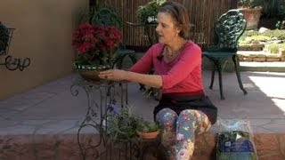 How To Plant Air Plants In Wrought Iron Plant Stands : Gardening & Flowers