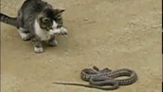 КРУТО! Кот vs Змея!!!
