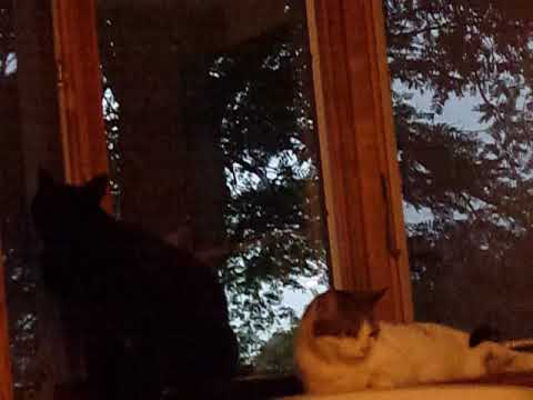 Cats Get Scared By Thunder