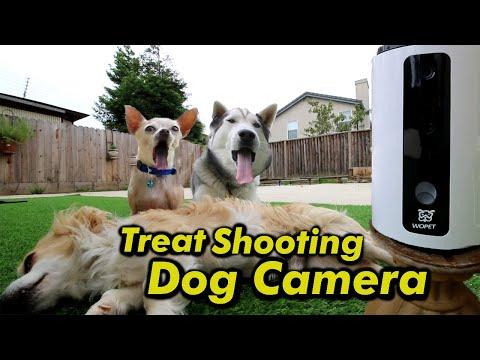 intelligent-dog-camera-attempts-to-train-stubborn-husky-pack