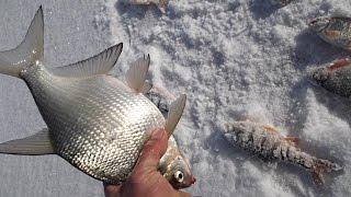 Зимняя рыбалка. Печенеги.