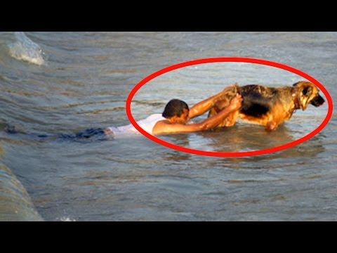Thumbnail: my dog saved me from drowning