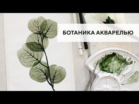 Ботаническая иллюстрация видео уроки