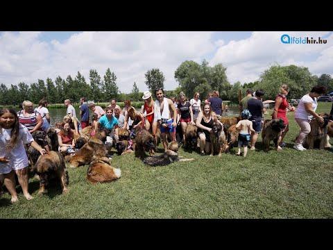 Tiszafüreden is indít tanfolyamokat az Egri Kutyasuli | Alföldhír.hu