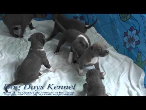 Breena Puppies • Spring 2011