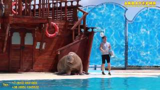"Театр морских животных ""Акватория"" (Ялта): танец моржа"