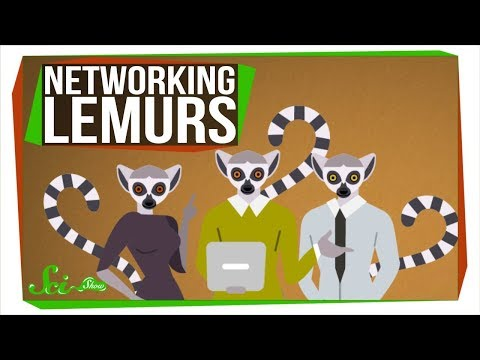 Lemurs Are Into Networking, Too!