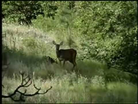 Sinlahekin Wildlife Area Tour