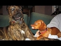 Dog Argument - Dogs Talking Like Human - Funny Compilation