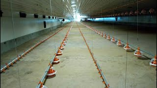 How to rear chicken using Battery Cages [ Farming In East-Africa(http://westgateintegrity.com/ )]