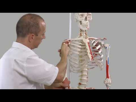Surface Anatomy Of The Nervous System Youtube