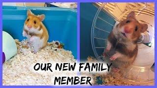 Getting Blue!! ( hamster vlog )