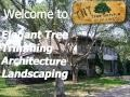 TNT Tree Service Welcome To Kingwood Elegant Tree Trimming Architecture Landscaping