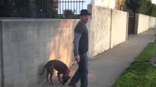 The Good Dog Minute 2/25/13: Working With Leash Aggression, Anxiety/fear, And Pulling.