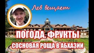 О погоде, фруктах, мраморных клопах + официальный YouTube канал пансионата Сосновая роща, Абхазия