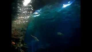 Океанариум в Адлере(, 2013-03-08T22:34:58.000Z)