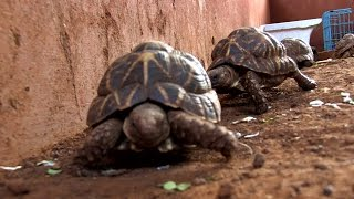 Open Secret: A Glimpse Into The Illegal Exotic-Pets Market  in Mumbai