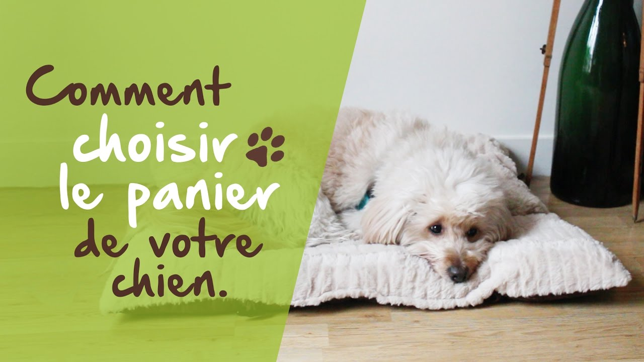 comment choisir le panier de votre chien youtube. Black Bedroom Furniture Sets. Home Design Ideas
