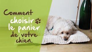 Comment choisir le panier de votre chien