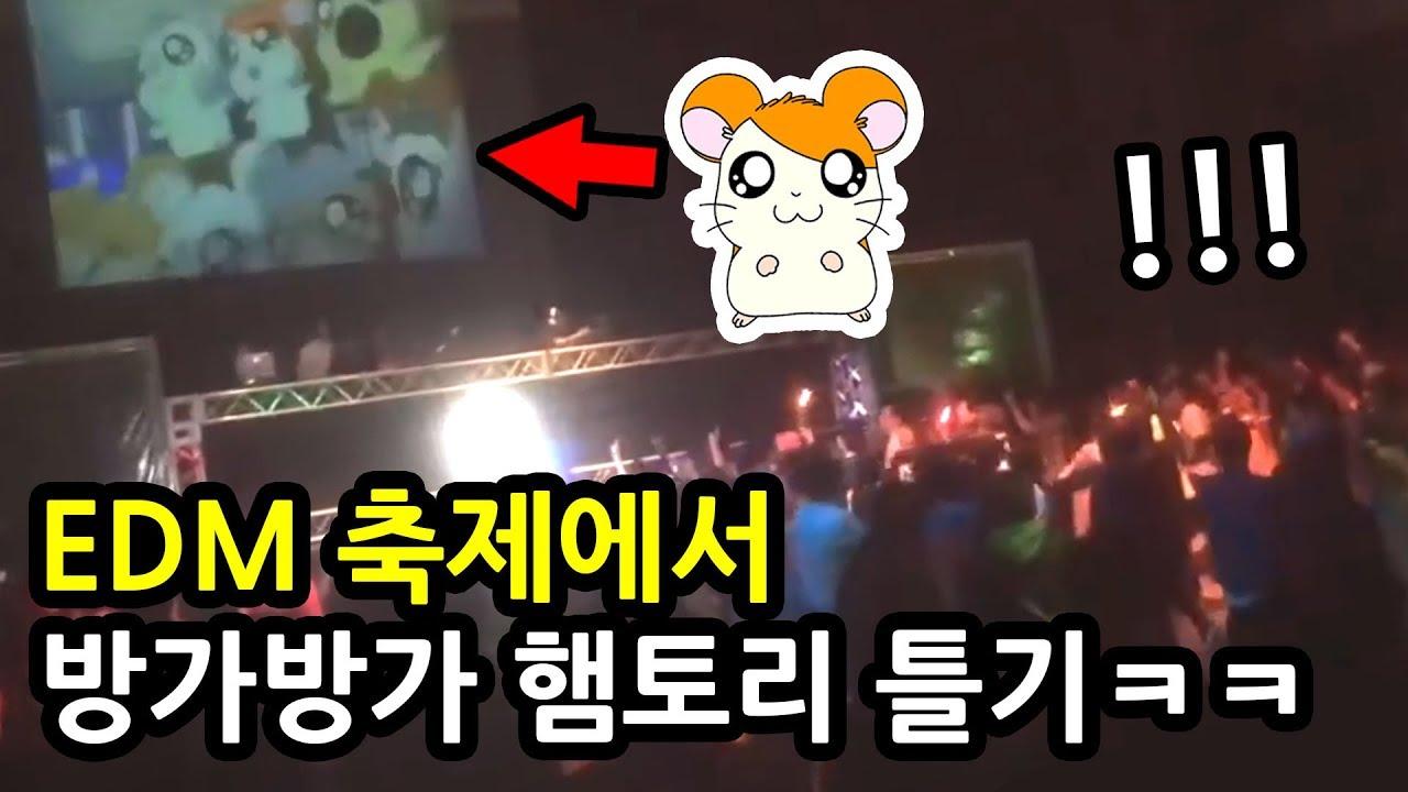 EDM 축제에서 방가방가 햄토리 틀기ㅋㅋㅋㅋㅋㅋ (일본 반응,웃긴 영상)