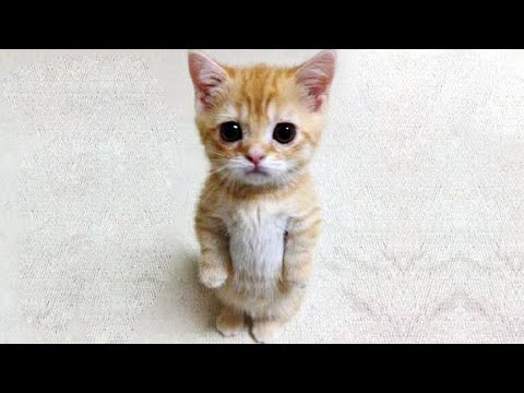 OMG So Cute and Funny Cats 2020