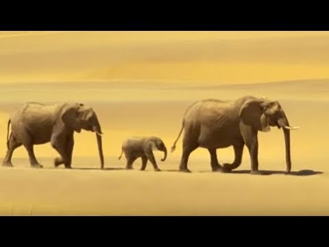 Elephants in the Namib desert | Wild Africa | BBC