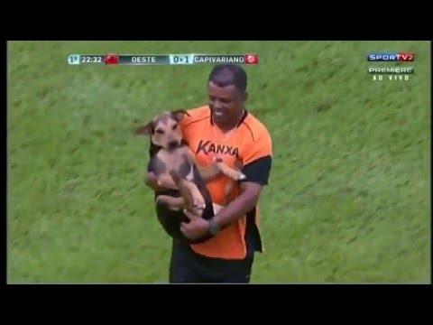 Dog Wants to play football