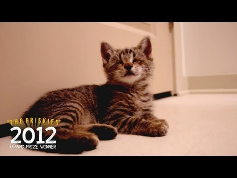 "The Friskies 2012 Grand Prize Winner: ""Oskar's First Toys"""
