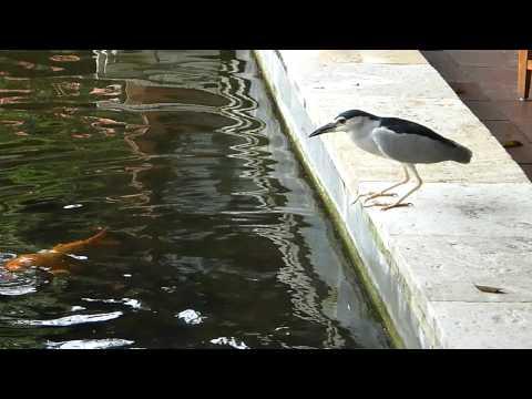 Bird Fishing With Bread (2) By DMC-TS1