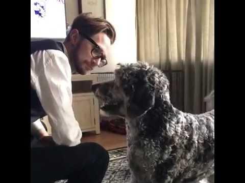 Funny Aussiedoodle Dog