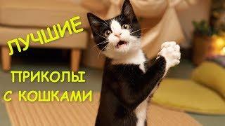 Приколы с котами и кошками | Подборка смешных видео с животными | THE BEST CAT VIDEOS | Funny Cats.